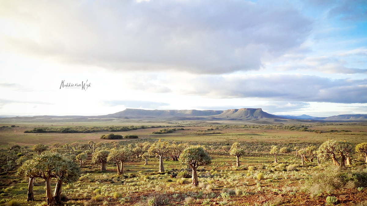 Gannabos Guest Farm | Quiver Tree Forest